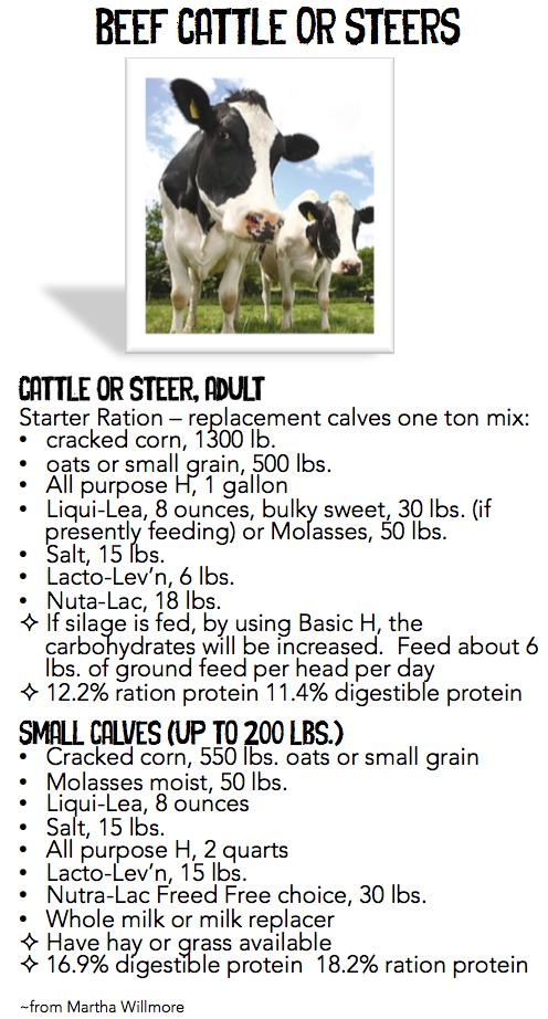 beef catle or steers